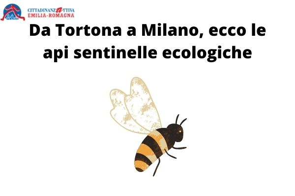 Le api sentinelle ecologiche